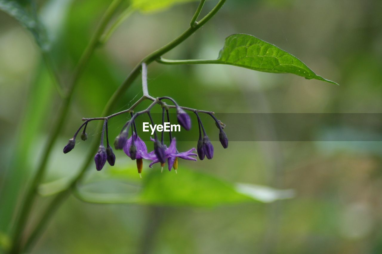 plant, growth, beauty in nature, flower, vulnerability, flowering plant, fragility, plant part, leaf, close-up, green color, focus on foreground, nature, purple, freshness, no people, day, petal, selective focus, flower head, outdoors
