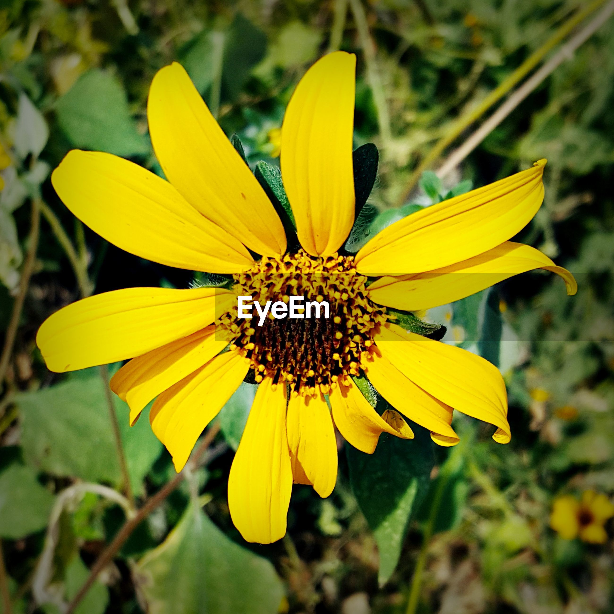 CLOSE-UP OF YELLOW FLOWER BLOOMING IN GARDEN