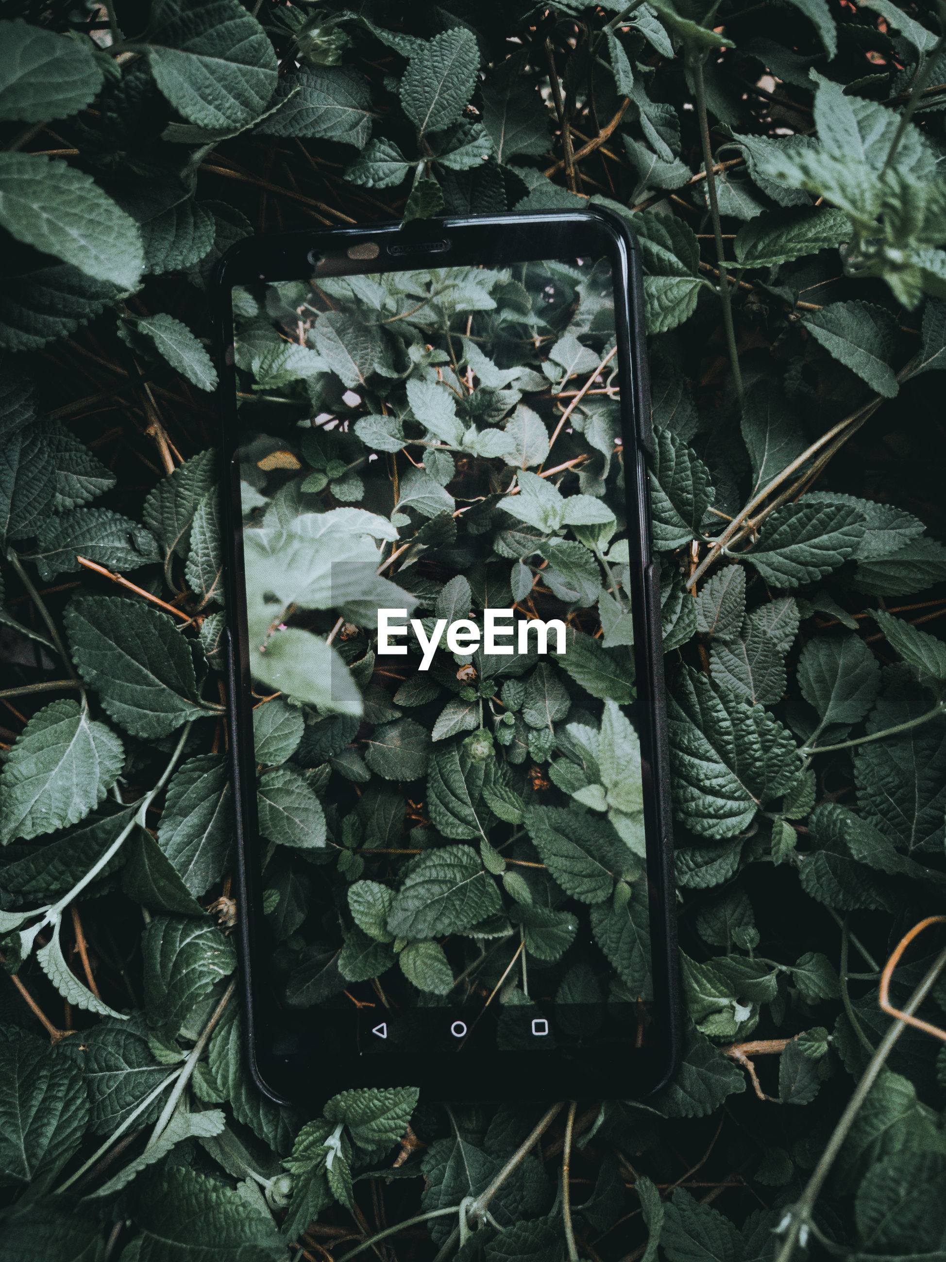 Directly above shot of smart phone on plants