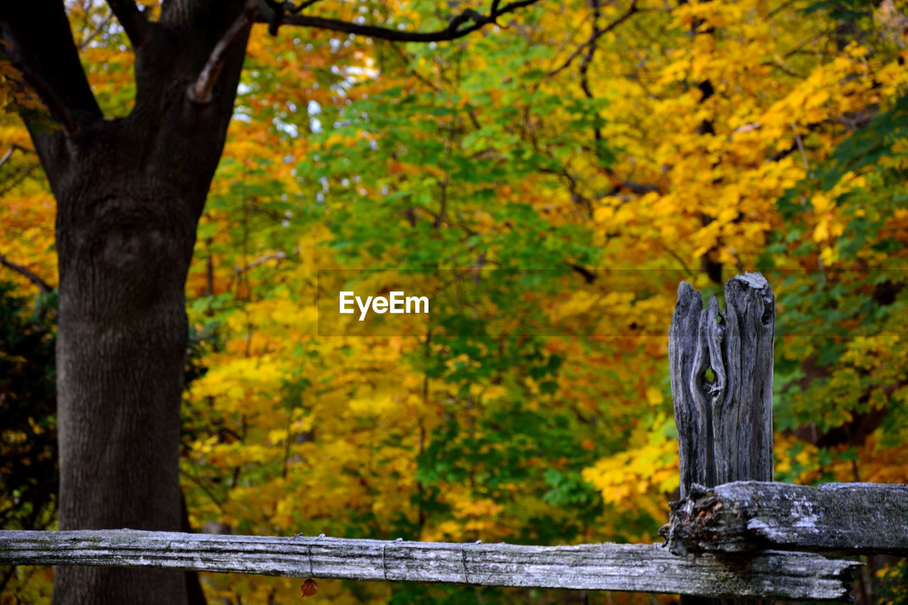 tree, wood - material, outdoors, autumn, day, no people, nature, close-up