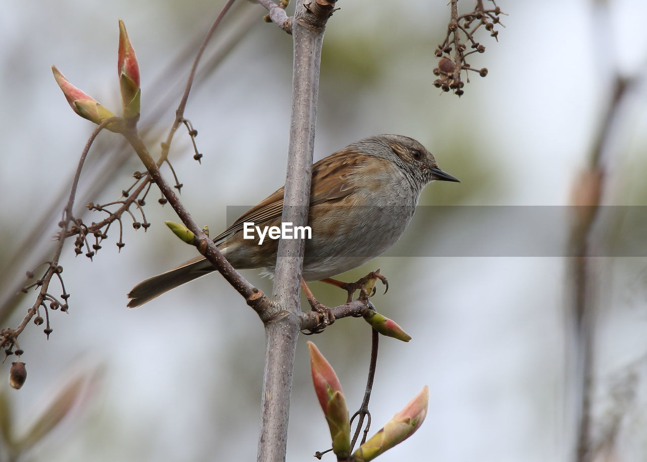 vertebrate, bird, animal, animal themes, plant, one animal, focus on foreground, animal wildlife, animals in the wild, perching, nature, no people, close-up, branch, day, beauty in nature, tree, outdoors, growth, selective focus