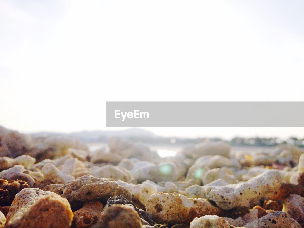 no people, food and drink, food, clear sky, nature, day, outdoors, beauty in nature, sky, freshness, close-up, pebble beach