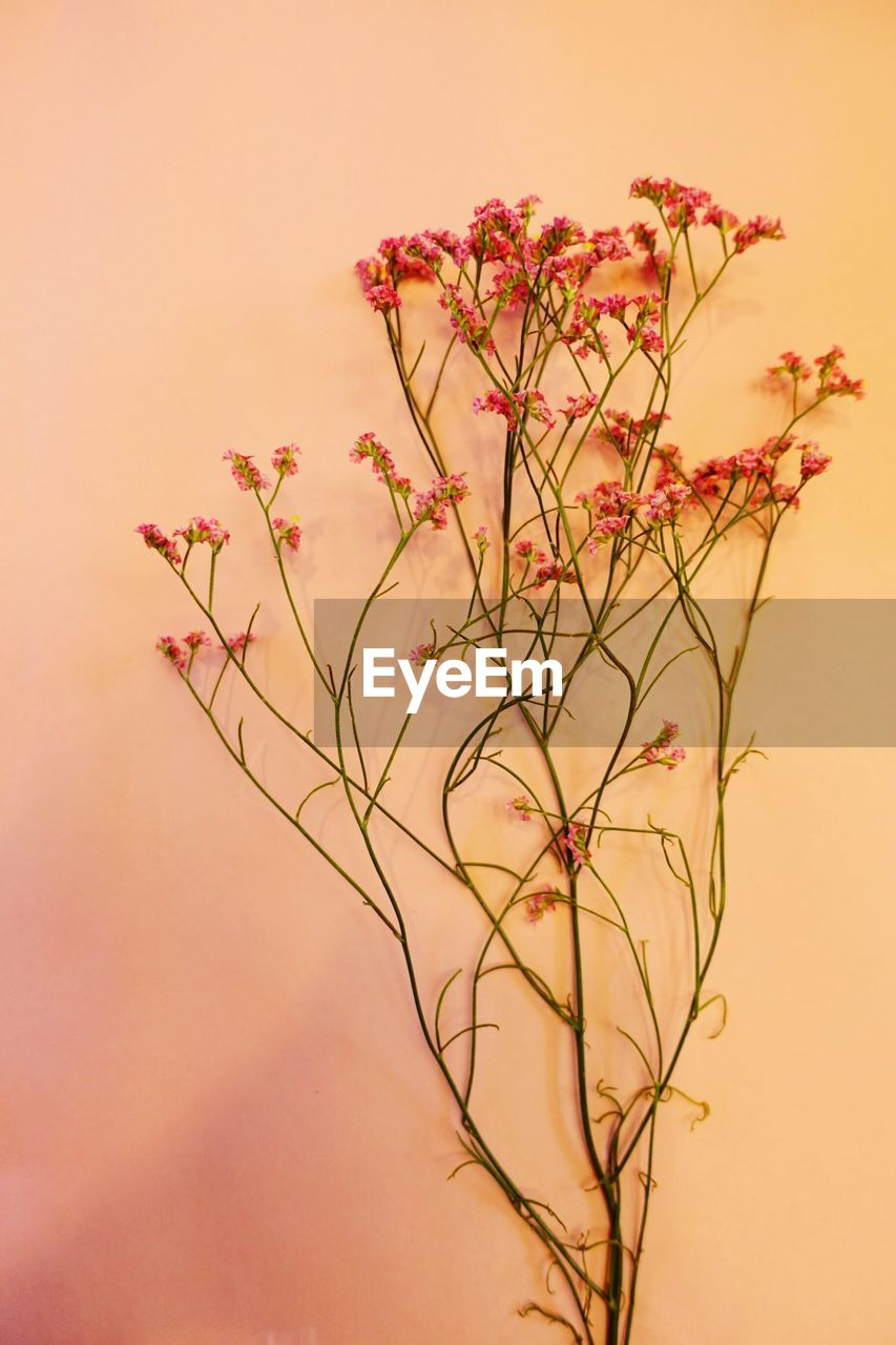 flower, plant, nature, no people, growth, petal, beauty in nature, flower head, fragility, close-up, freshness, branch, day, tree, outdoors