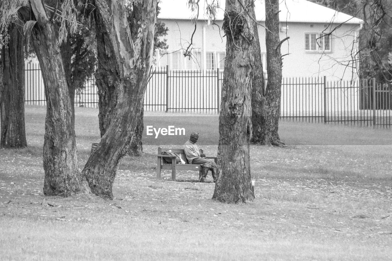 tree, tree trunk, plant, trunk, architecture, day, nature, sitting, seat, park, built structure, outdoors, grass, bench, no people, building exterior, park - man made space, absence, mammal, building, park bench