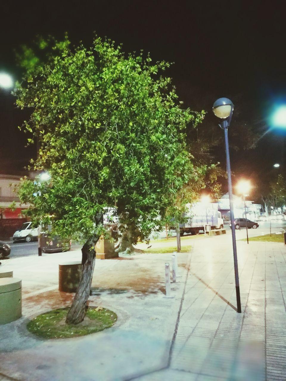 illuminated, street light, lighting equipment, tree, no people, night, outdoors, nature
