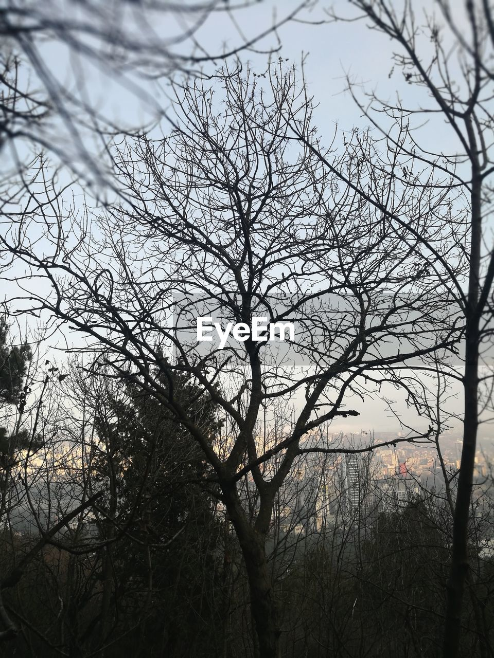 tree, bare tree, plant, branch, sky, no people, tranquility, nature, scenics - nature, outdoors, low angle view, beauty in nature, silhouette, tree trunk, trunk, non-urban scene, day, growth, tranquil scene, land