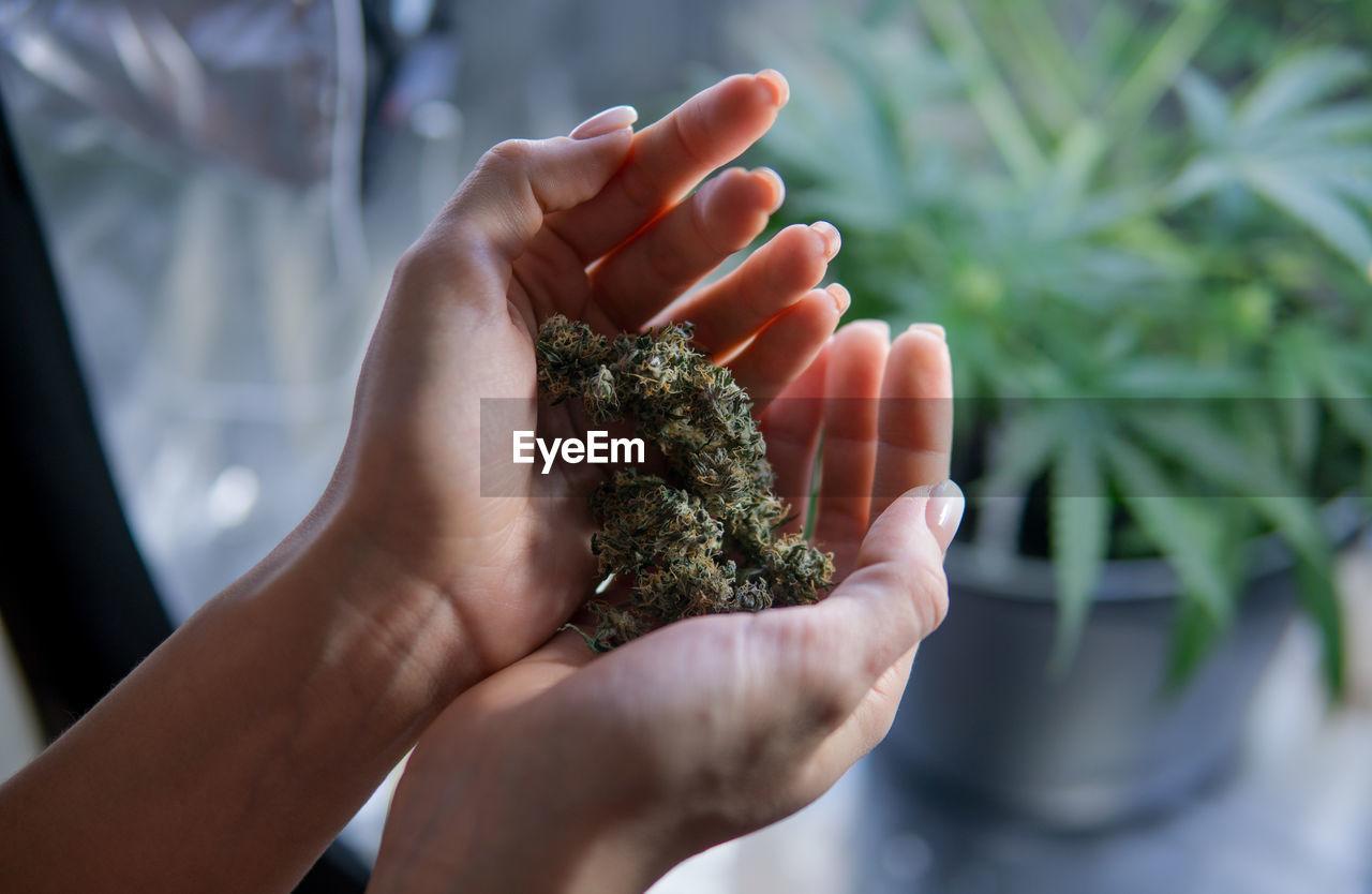 Close-Up Of Woman Holding Marijuana