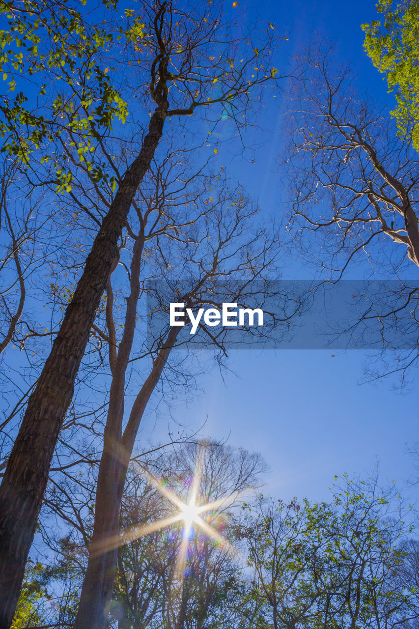tree, nature, branch, beauty in nature, low angle view, sky, tranquility, scenics, outdoors, bare tree, growth, no people, day