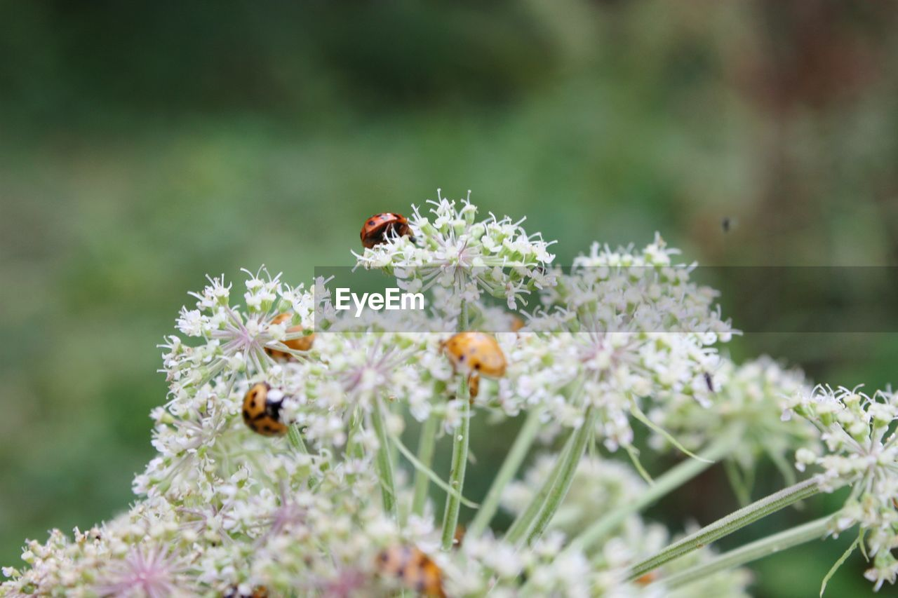 invertebrate, insect, animals in the wild, animal themes, animal, animal wildlife, flower, flowering plant, one animal, plant, fragility, bee, beauty in nature, freshness, vulnerability, close-up, day, no people, petal, flower head, pollination