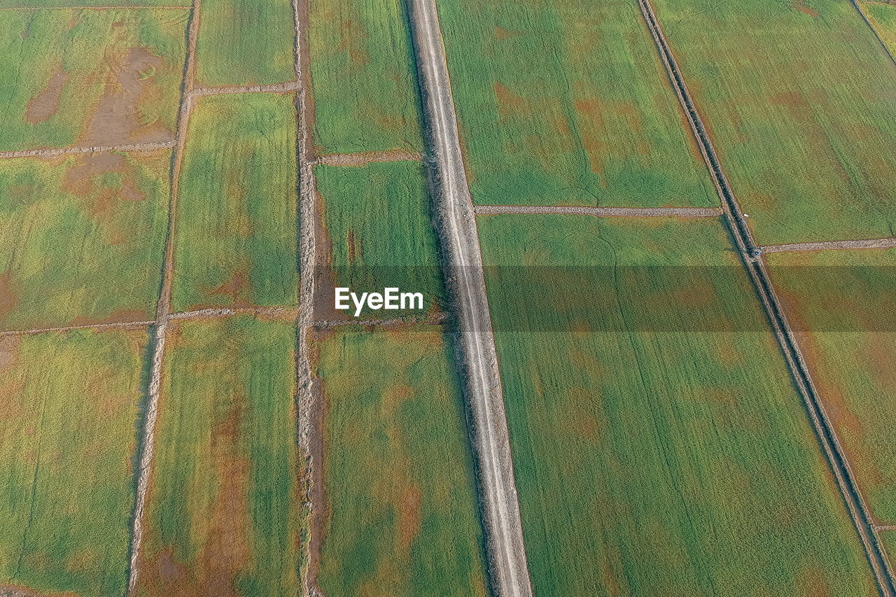 rural scene, field, landscape, pattern, agriculture, farm, no people, full frame, land, tranquil scene, growth, scenics - nature, day, aerial view, environment, tranquility, patchwork landscape, beauty in nature, high angle view, nature, outdoors, above, plantation