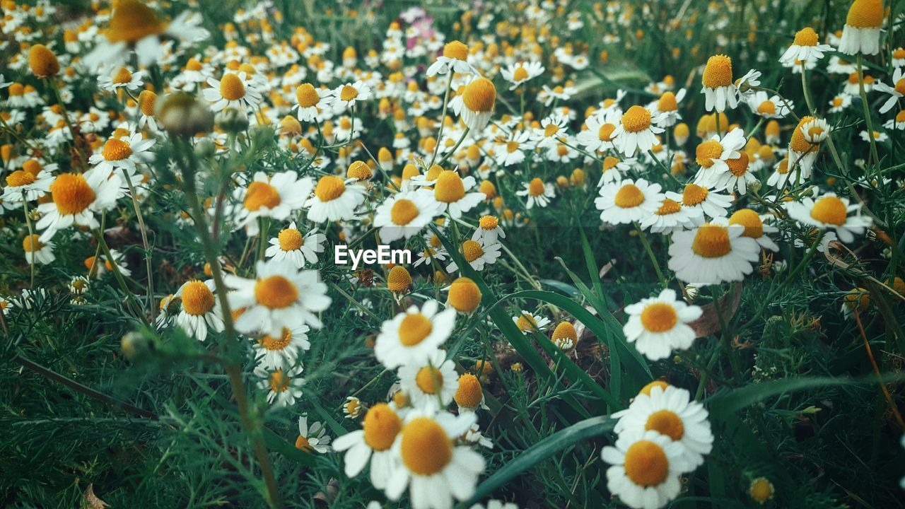 Detail Shot Of White Flowers