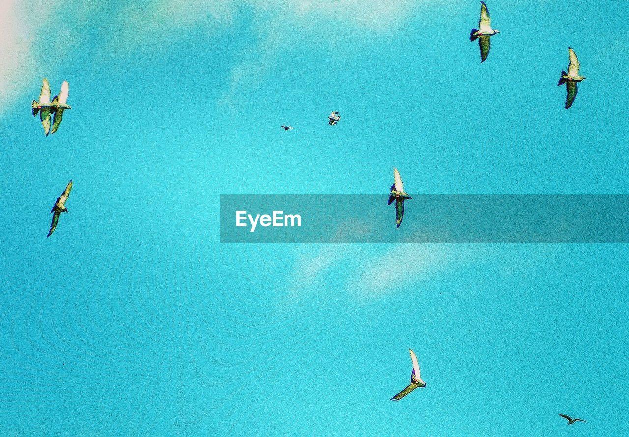 PEOPLE ON BIRDS AGAINST SKY