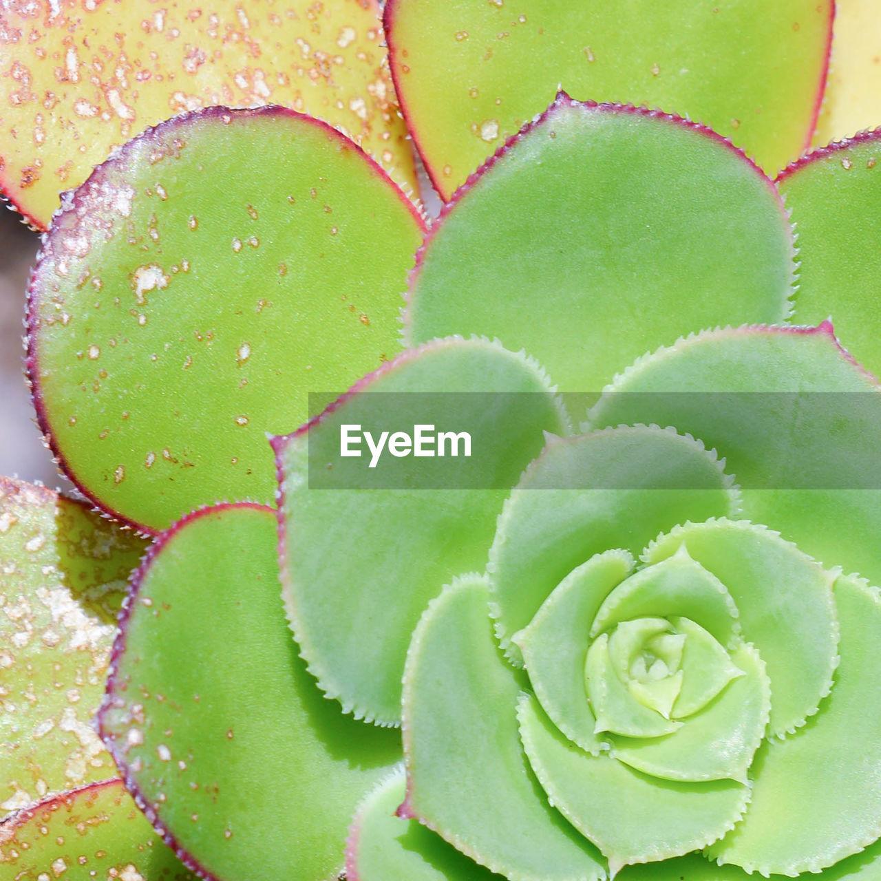 FULL FRAME SHOT OF CACTUS PLANT