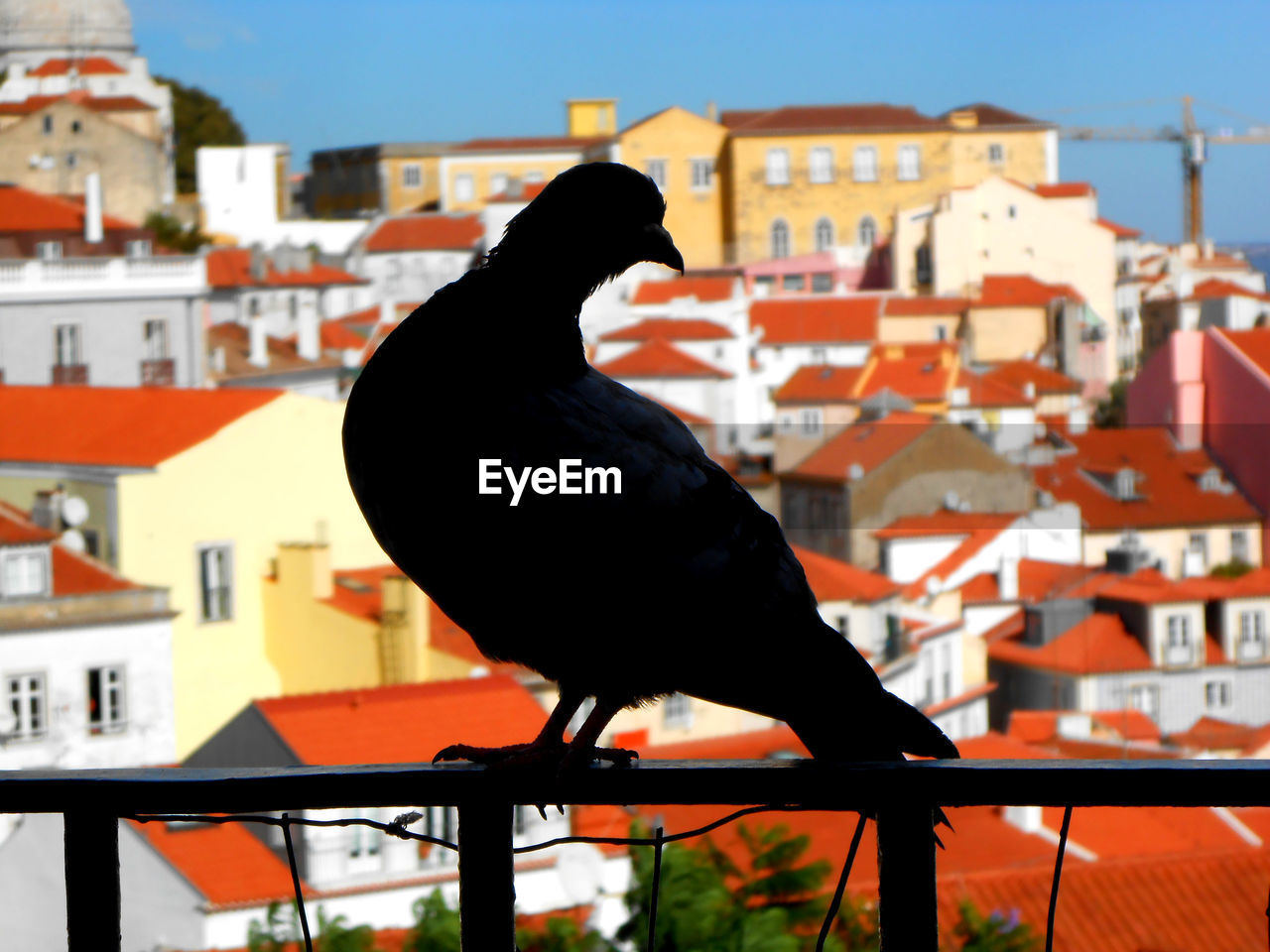 bird, one animal, animal themes, vertebrate, architecture, built structure, animal wildlife, animal, building exterior, animals in the wild, perching, focus on foreground, building, nature, day, no people, city, railing, sky, outdoors