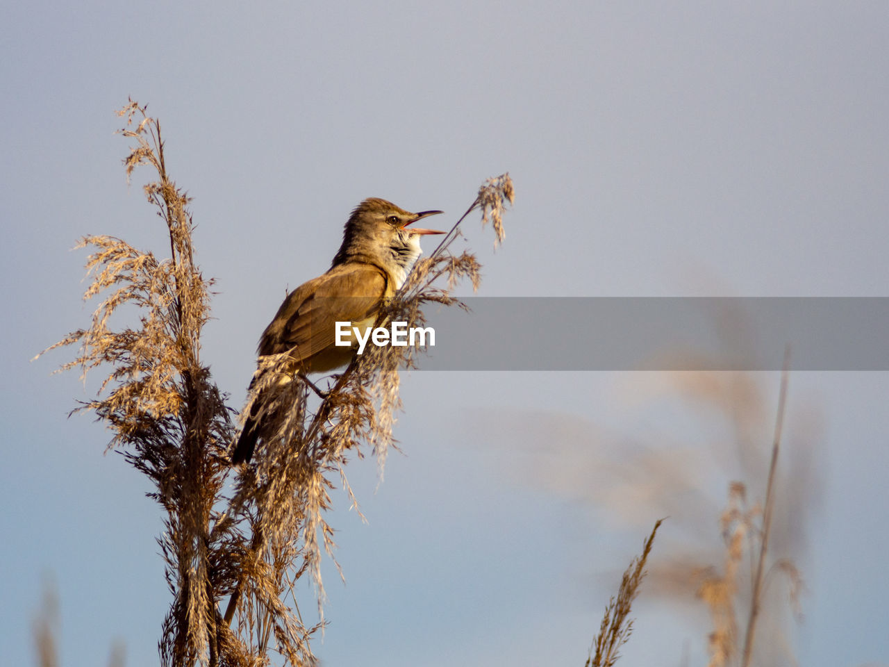 animal themes, animal wildlife, animals in the wild, animal, one animal, bird, vertebrate, plant, perching, tree, nature, no people, focus on foreground, sky, branch, low angle view, day, selective focus, outdoors, twig