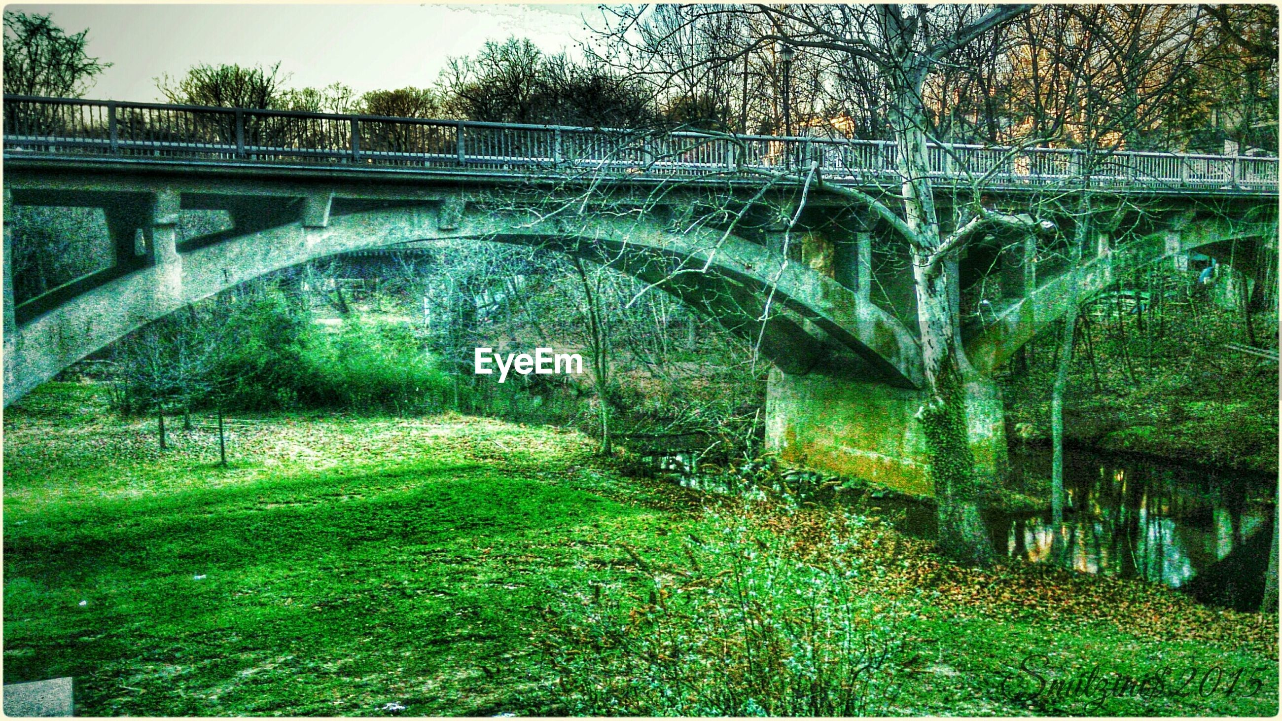 bridge - man made structure, architecture, built structure, connection, tree, arch, bridge, plant, green color, growth, footbridge, arch bridge, railing, nature, day, outdoors, grass, forest, no people, engineering