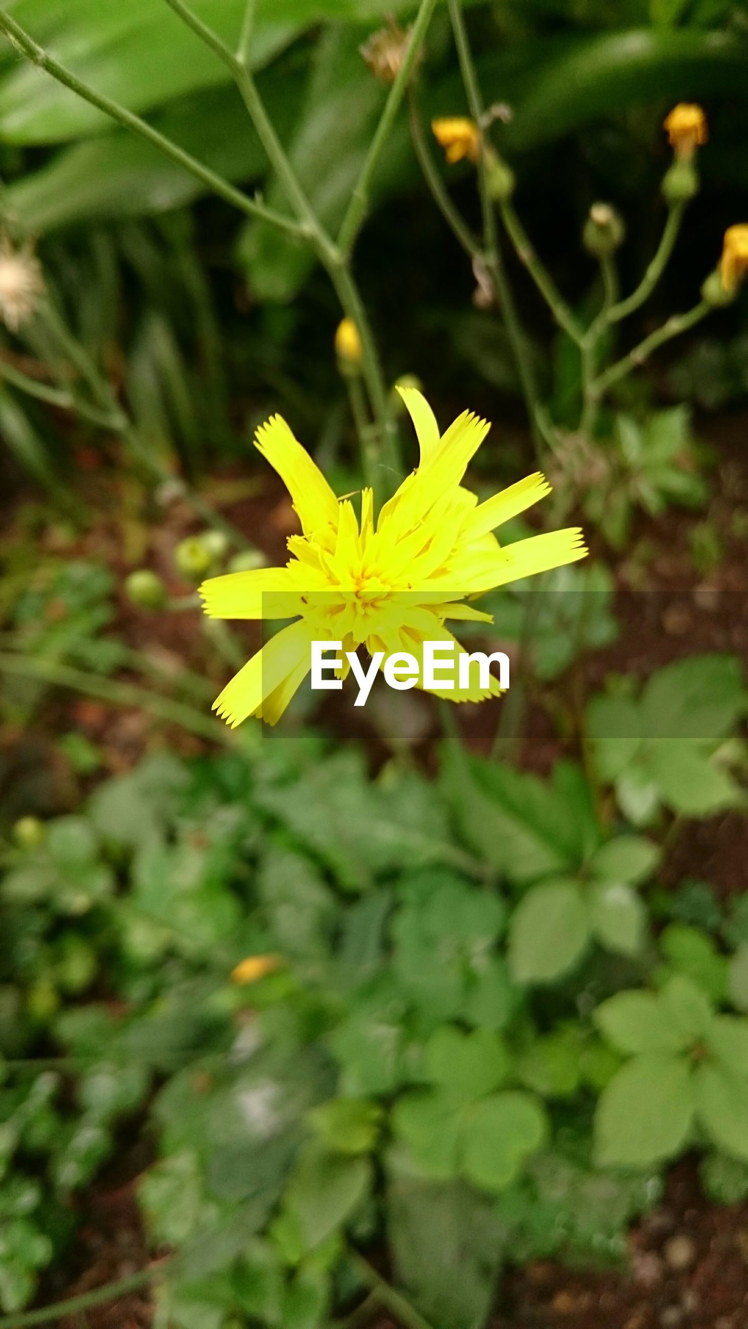 flower, yellow, petal, freshness, fragility, growth, beauty in nature, focus on foreground, flower head, nature, close-up, single flower, plant, blooming, outdoors, day, insect, leaf, selective focus, no people