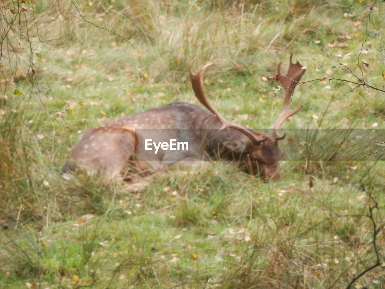 one animal, animal themes, mammal, grass, nature, no people, field, animals in the wild, day, outdoors