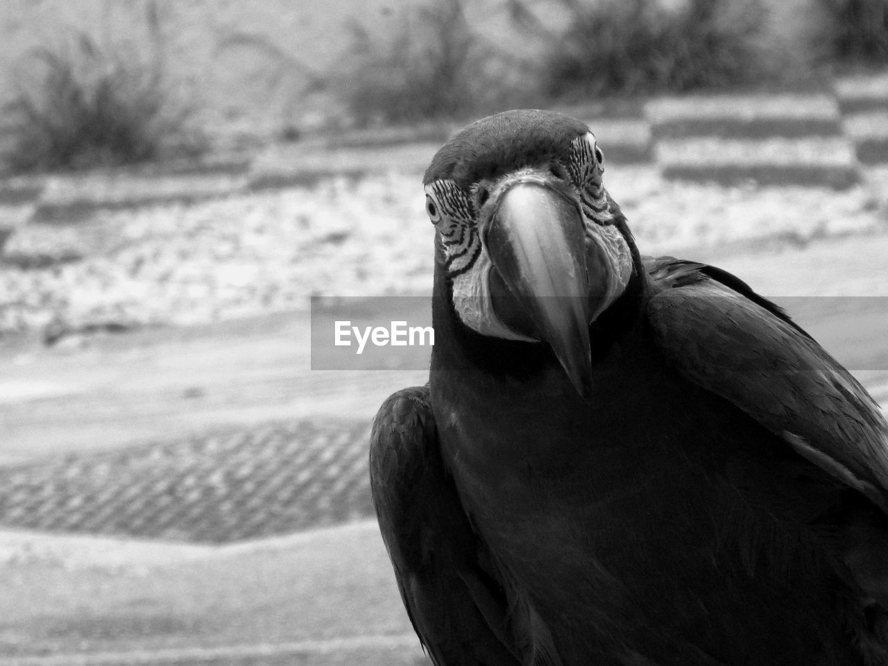 one animal, animals in the wild, animal wildlife, vertebrate, bird, focus on foreground, close-up, day, no people, nature, beak, outdoors, mouth, land, mouth open, looking, beauty in nature
