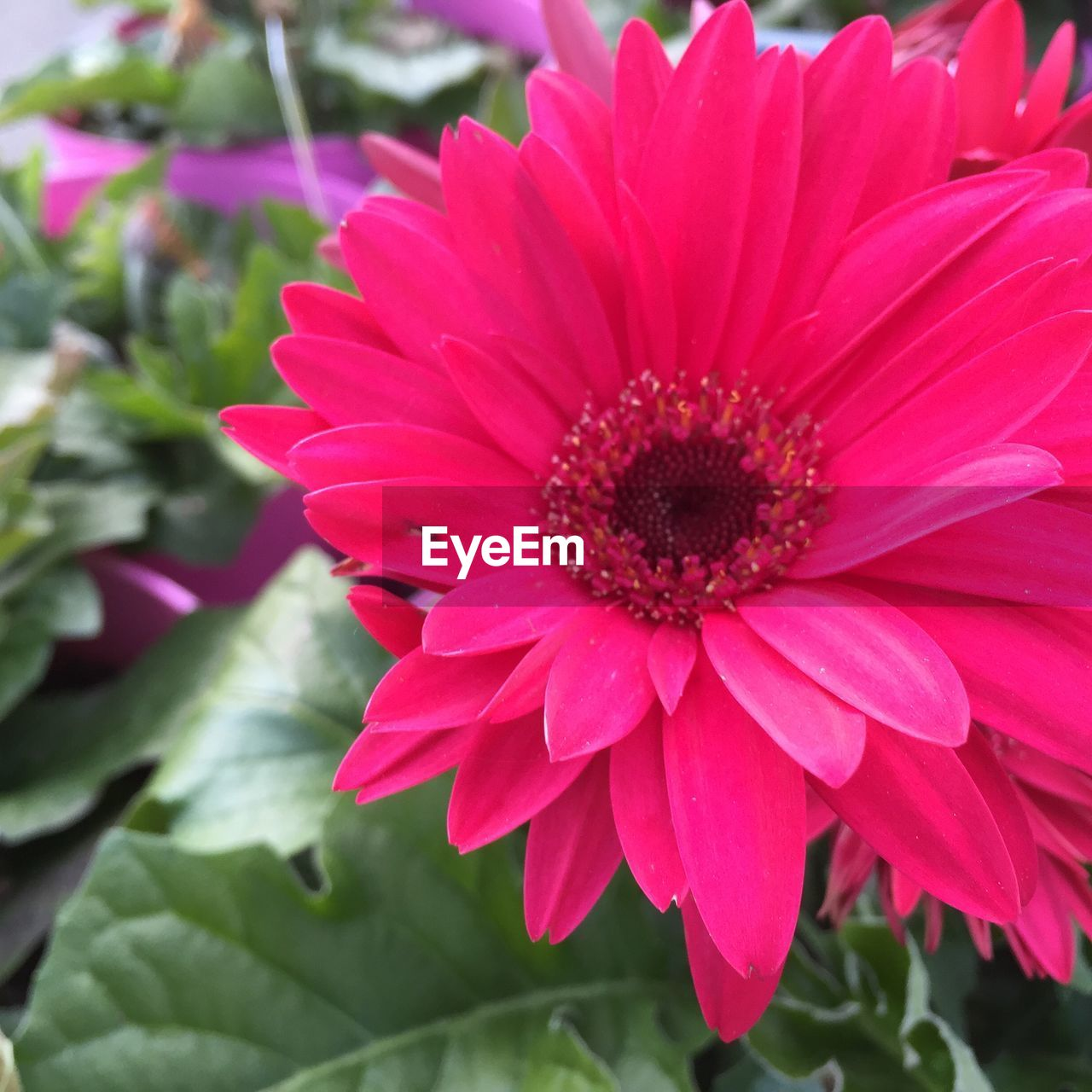 flower, petal, beauty in nature, nature, fragility, flower head, freshness, growth, no people, plant, close-up, day, outdoors, blooming, pink color, red