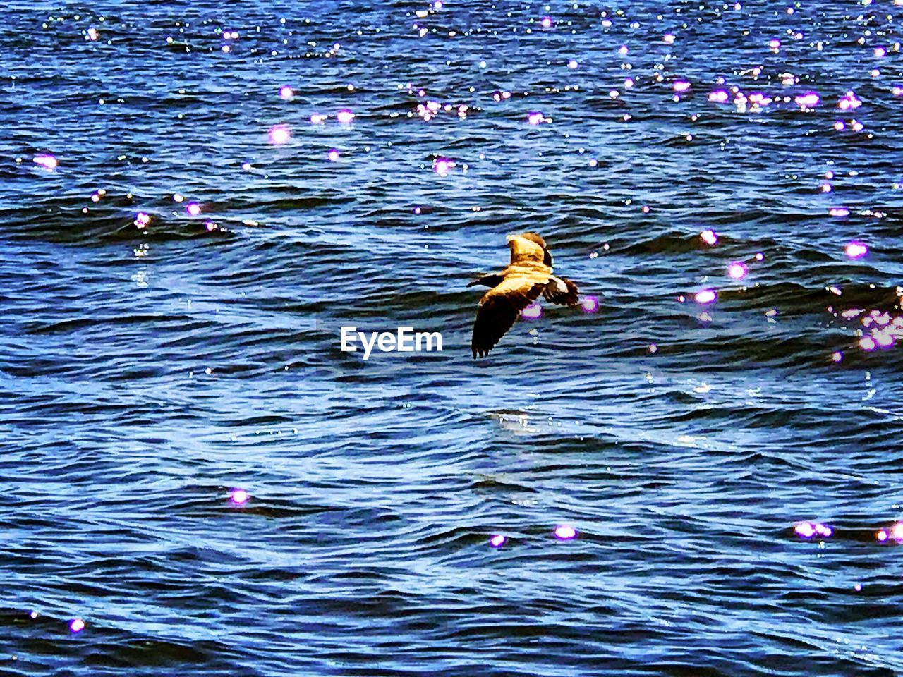 animals in the wild, animal themes, bird, animal wildlife, swimming, waterfront, water, one animal, rippled, outdoors, no people, day, lake, nature