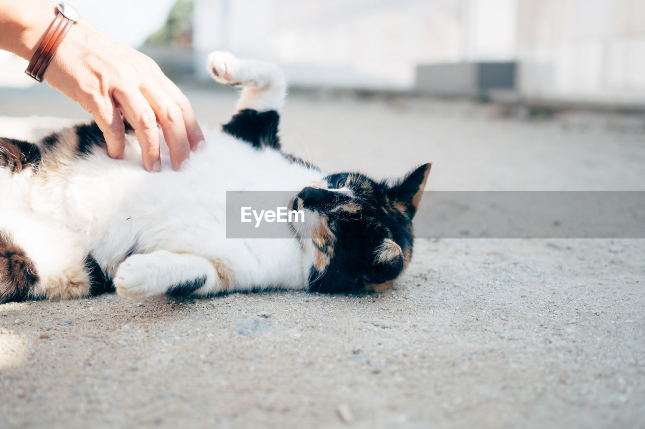 Cropped image of hand touching cat