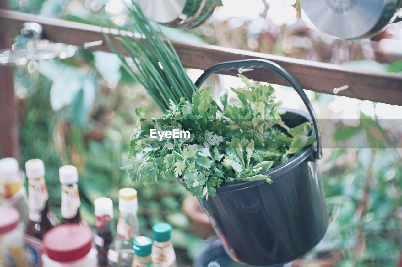 plant, close-up, no people, focus on foreground, nature, day, leaf, plant part, green color, freshness, flowering plant, flower, glass - material, food and drink, outdoors, growth, selective focus, food, container, decoration, glass, flower arrangement, flower pot