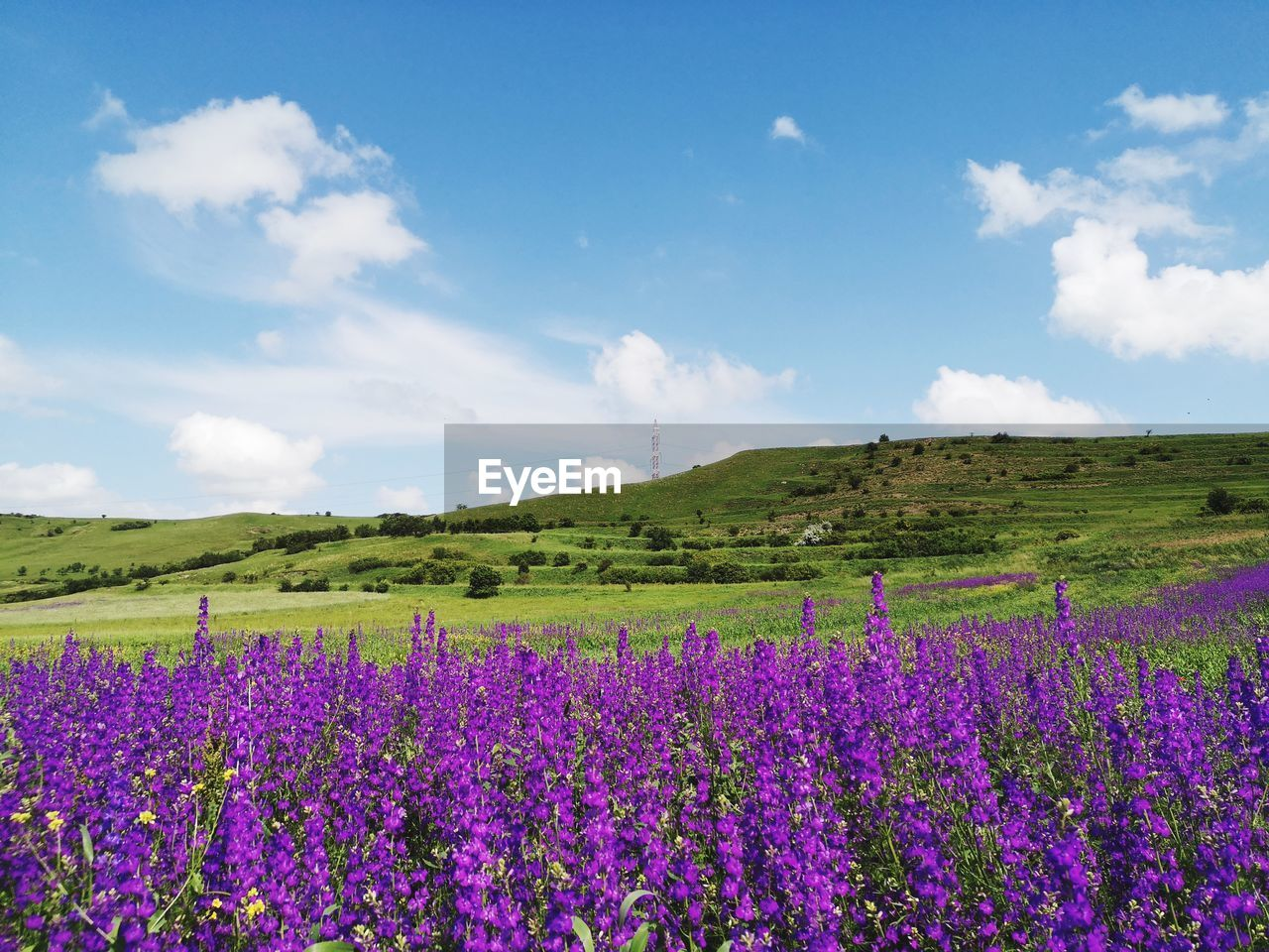 beauty in nature, flower, flowering plant, plant, landscape, land, tranquil scene, environment, sky, scenics - nature, field, growth, purple, tranquility, nature, cloud - sky, vulnerability, day, freshness, fragility, no people, lavender, flowerbed