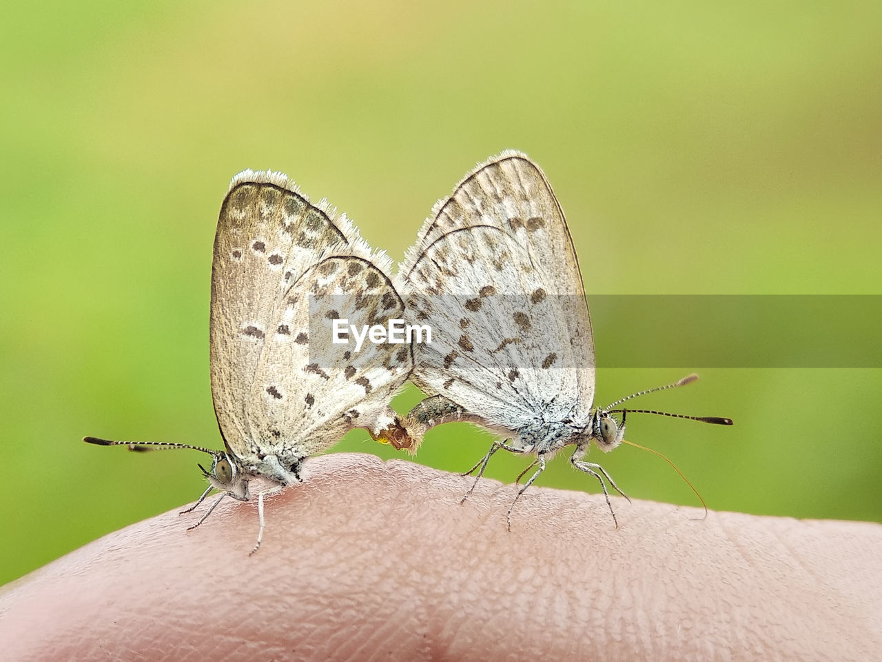 insect, invertebrate, human body part, animal, animal themes, animal wildlife, body part, close-up, human hand, animals in the wild, animal wing, hand, one animal, unrecognizable person, butterfly - insect, focus on foreground, real people, finger, human finger, day, outdoors, butterfly