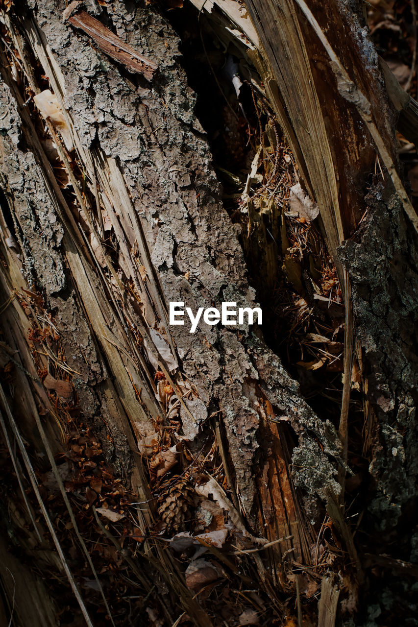 wood - material, tree, no people, nature, plant, close-up, land, forest, day, field, selective focus, wood, tree trunk, dry, growth, textured, outdoors, trunk, full frame, high angle view, bark