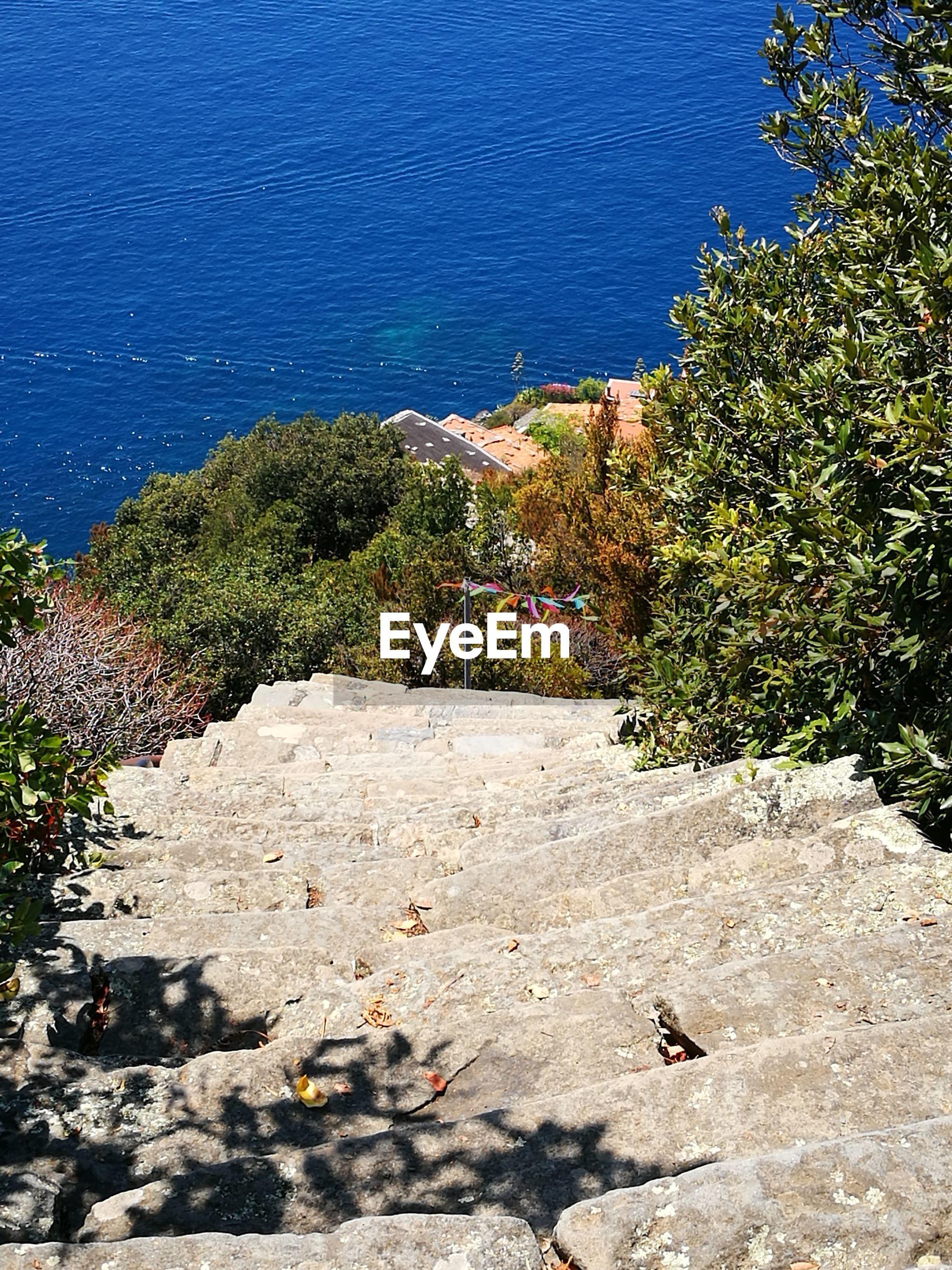 HIGH ANGLE VIEW OF SEA AMIDST PLANTS ON BEACH