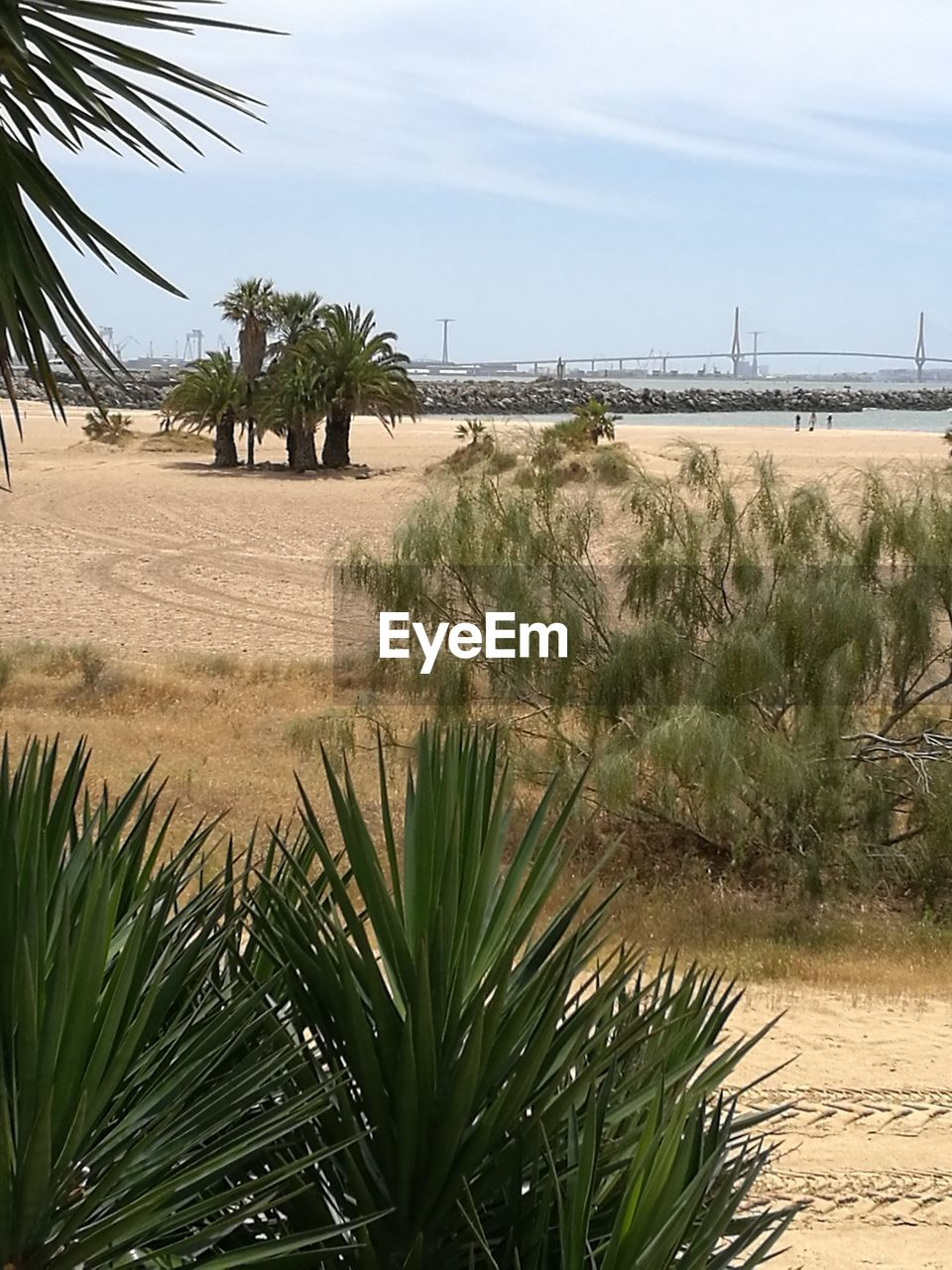 growth, tree, palm tree, nature, sky, beauty in nature, sand, plant, outdoors, no people, day, tranquility, water, scenics, landscape