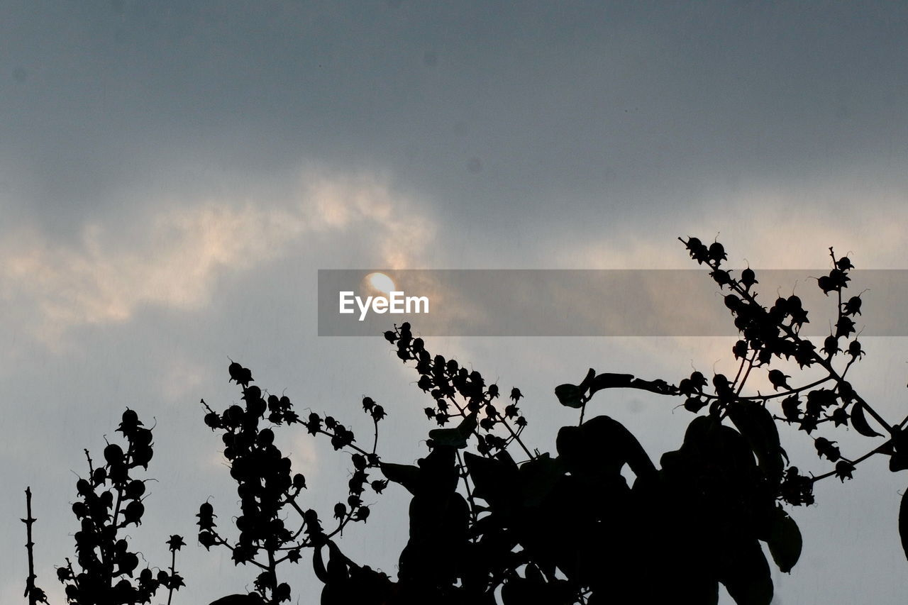 sky, silhouette, tree, low angle view, plant, cloud - sky, nature, growth, beauty in nature, branch, tranquility, outdoors, sunset, no people, scenics - nature, moon, dusk, tranquil scene, plant part, leaf