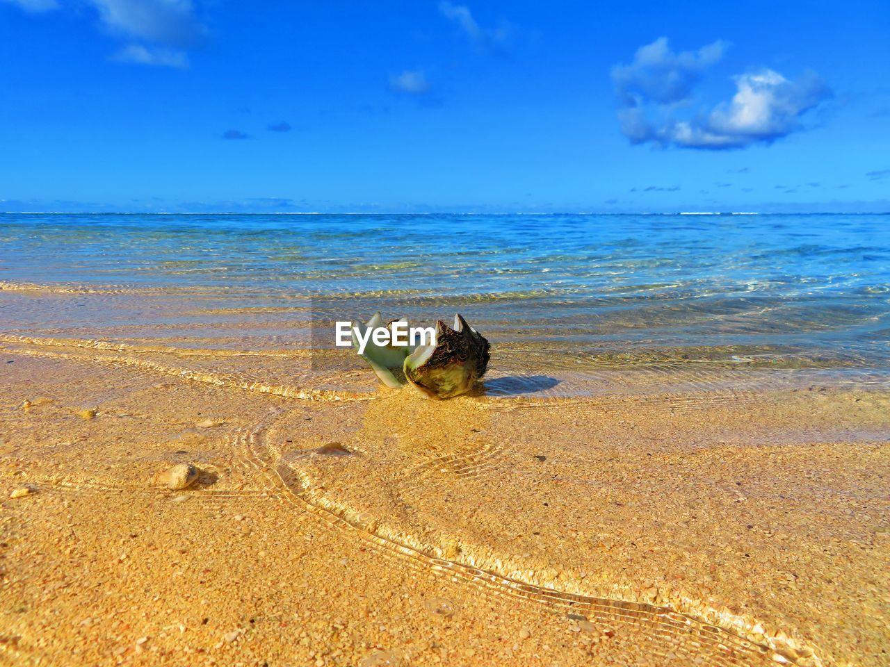 sea, water, beach, land, animal, sky, sand, one animal, horizon, horizon over water, animal themes, beauty in nature, nature, scenics - nature, no people, animal wildlife, day, vertebrate, blue, marine