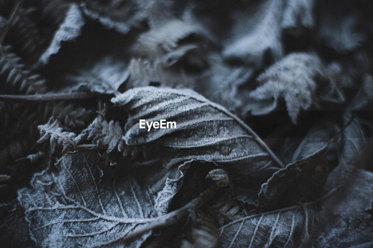 Full frame shot of frosted leaves