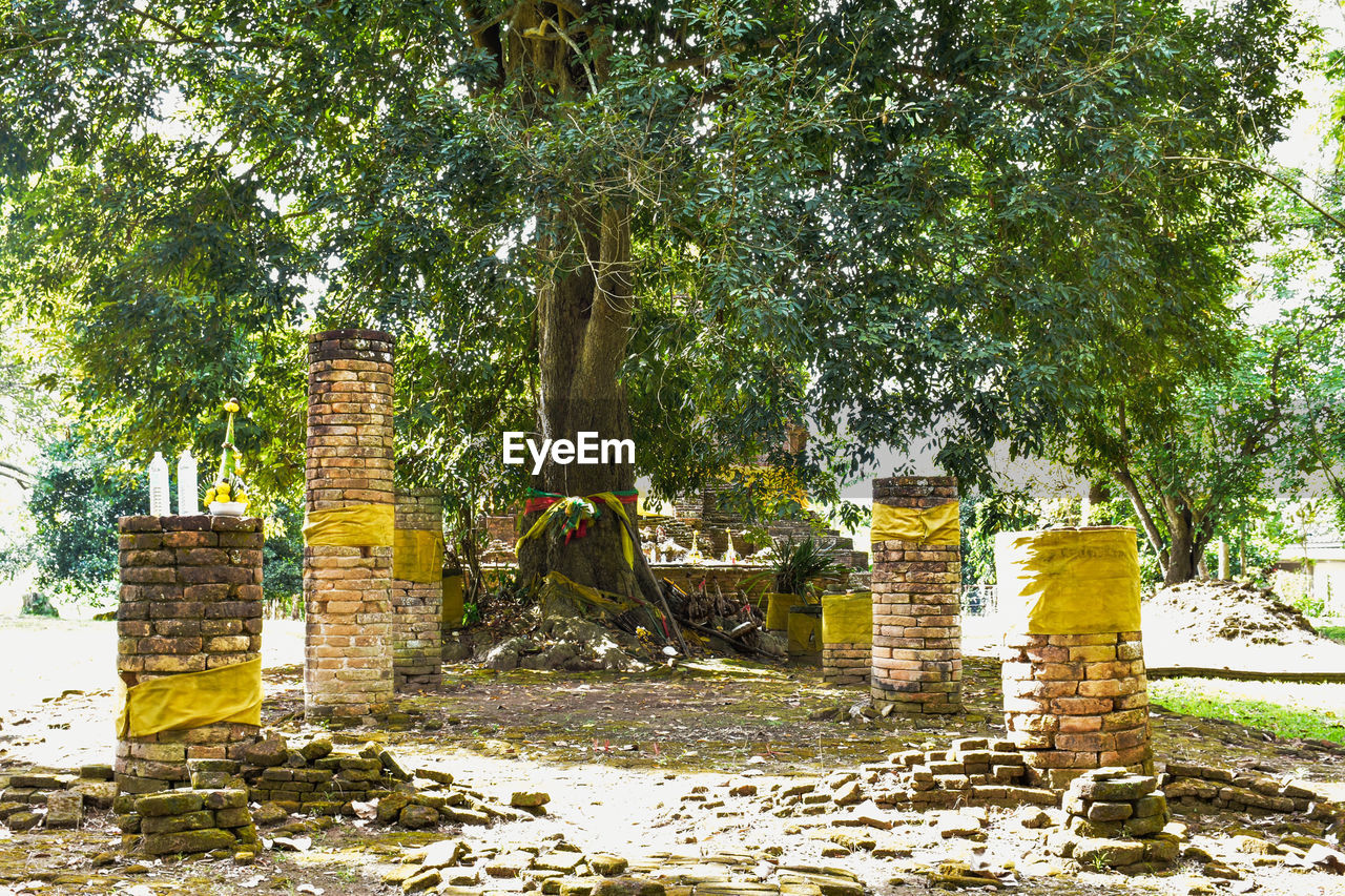 tree, plant, history, built structure, architecture, the past, nature, day, religion, no people, old ruin, belief, ancient, growth, place of worship, grave, sunlight, old, cemetery, outdoors, ruined, architectural column, ancient civilization