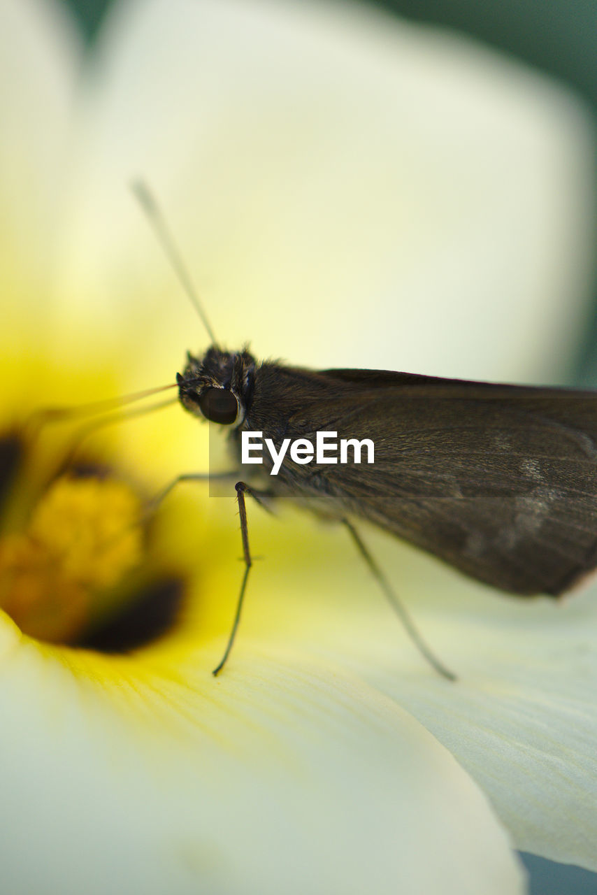 invertebrate, insect, one animal, animal themes, animal, animals in the wild, close-up, animal wildlife, selective focus, animal wing, no people, day, yellow, nature, animal body part, animal antenna, beauty in nature, flower, freshness, macro