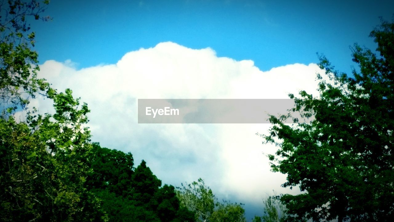 tree, sky, nature, beauty in nature, low angle view, day, tranquility, scenics, cloud - sky, no people, outdoors, growth, blue, plant, blue sky