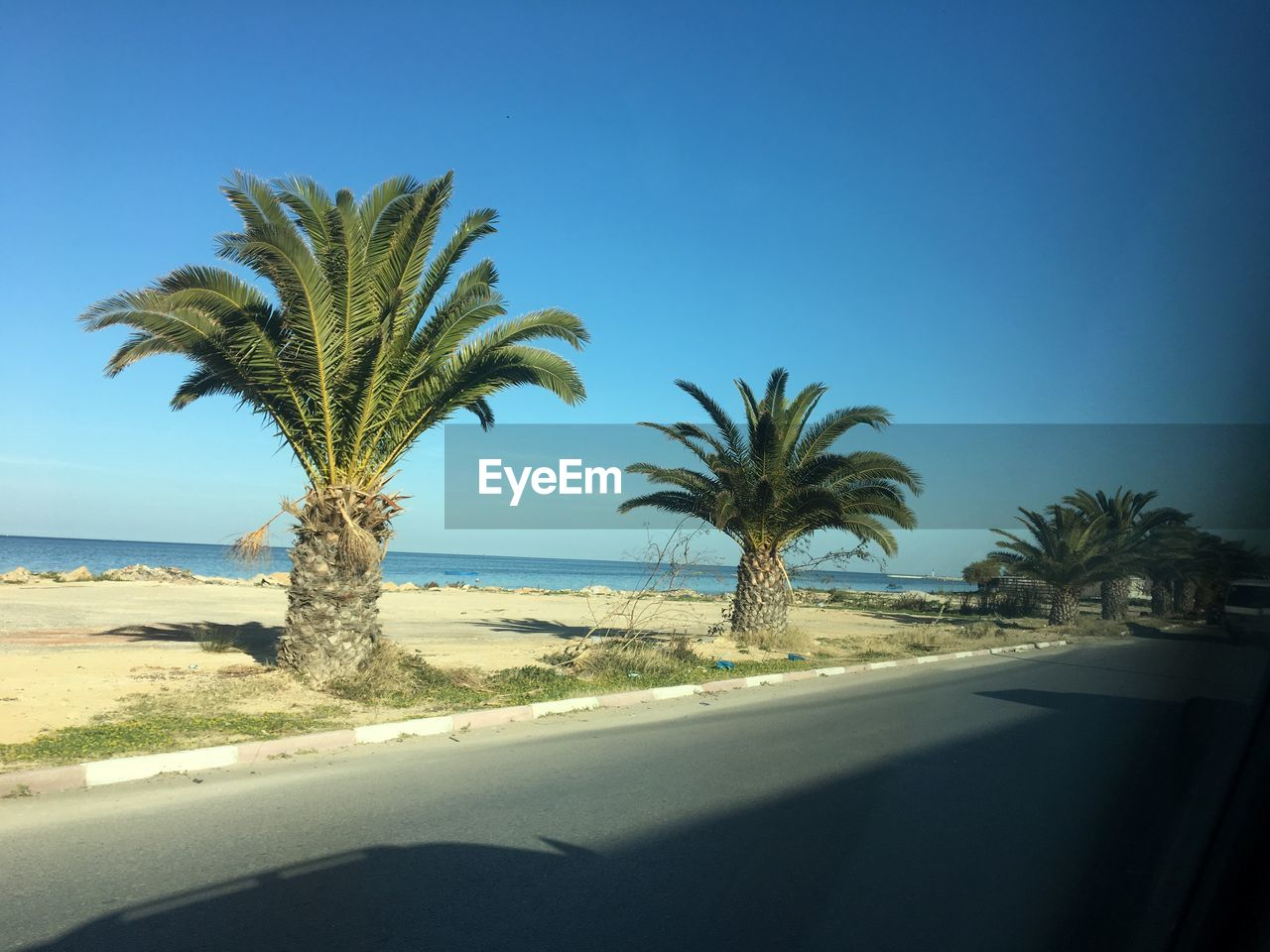 Palm trees by road seen through car window against blue sky