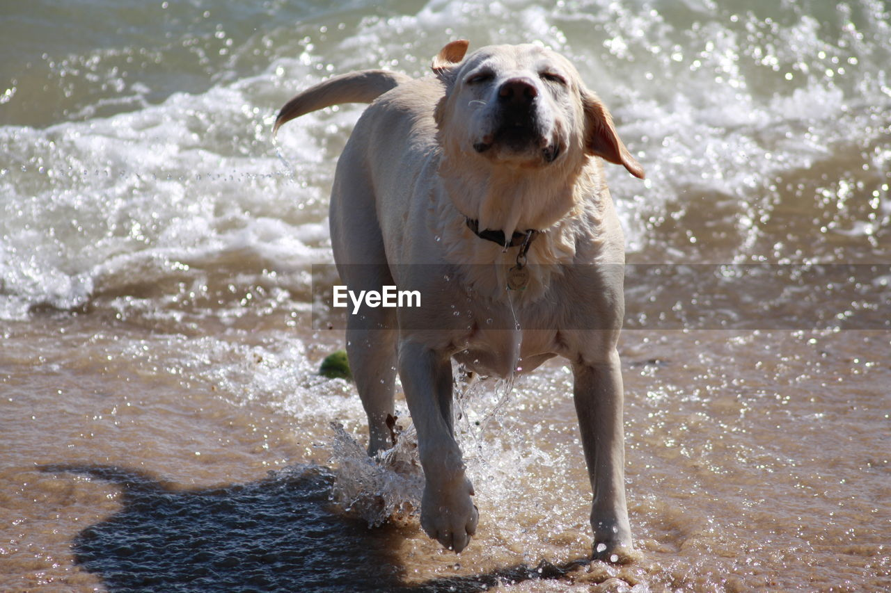 Dog playing in water at beach