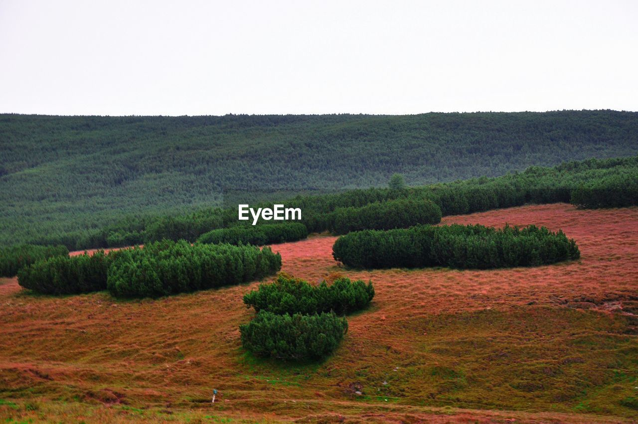 High Angle View Of Plants Growing On Field Over Mountain Against Clear Sky