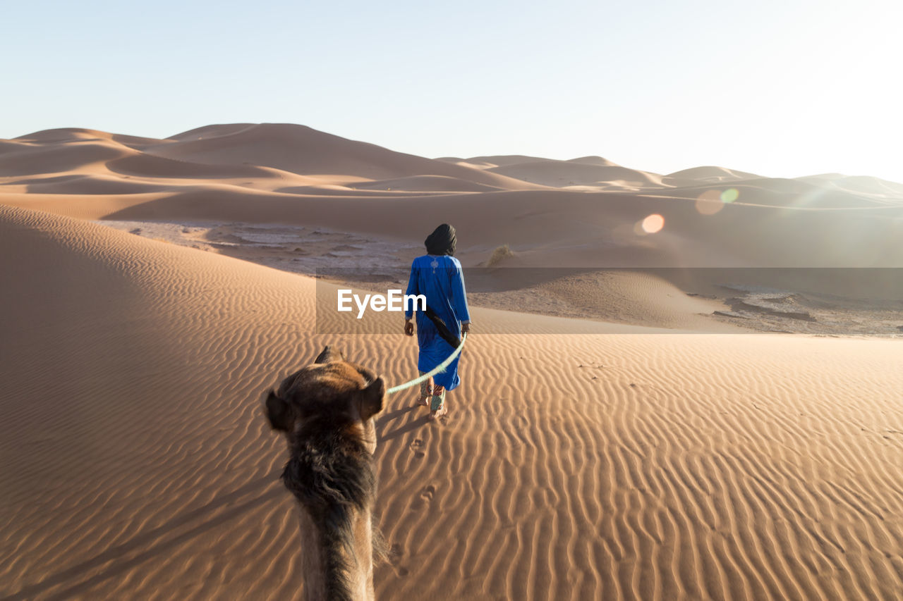 Rear View Of Man With Camel Walking On Sand Against Clear Sky