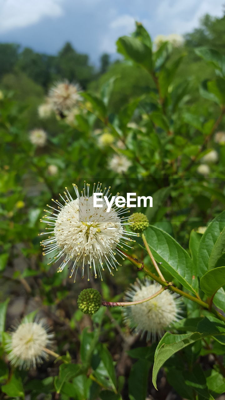 flower, nature, growth, green color, fragility, beauty in nature, day, plant, freshness, outdoors, flower head, no people, leaf, close-up, blooming