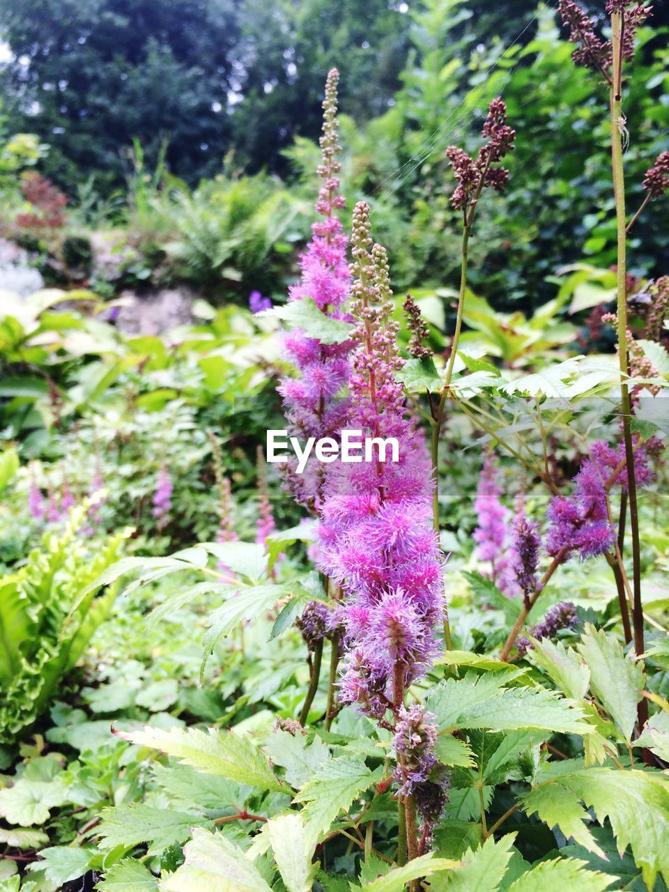 purple, growth, plant, nature, flower, beauty in nature, fragility, day, no people, outdoors, freshness, green color, blooming, close-up, flower head