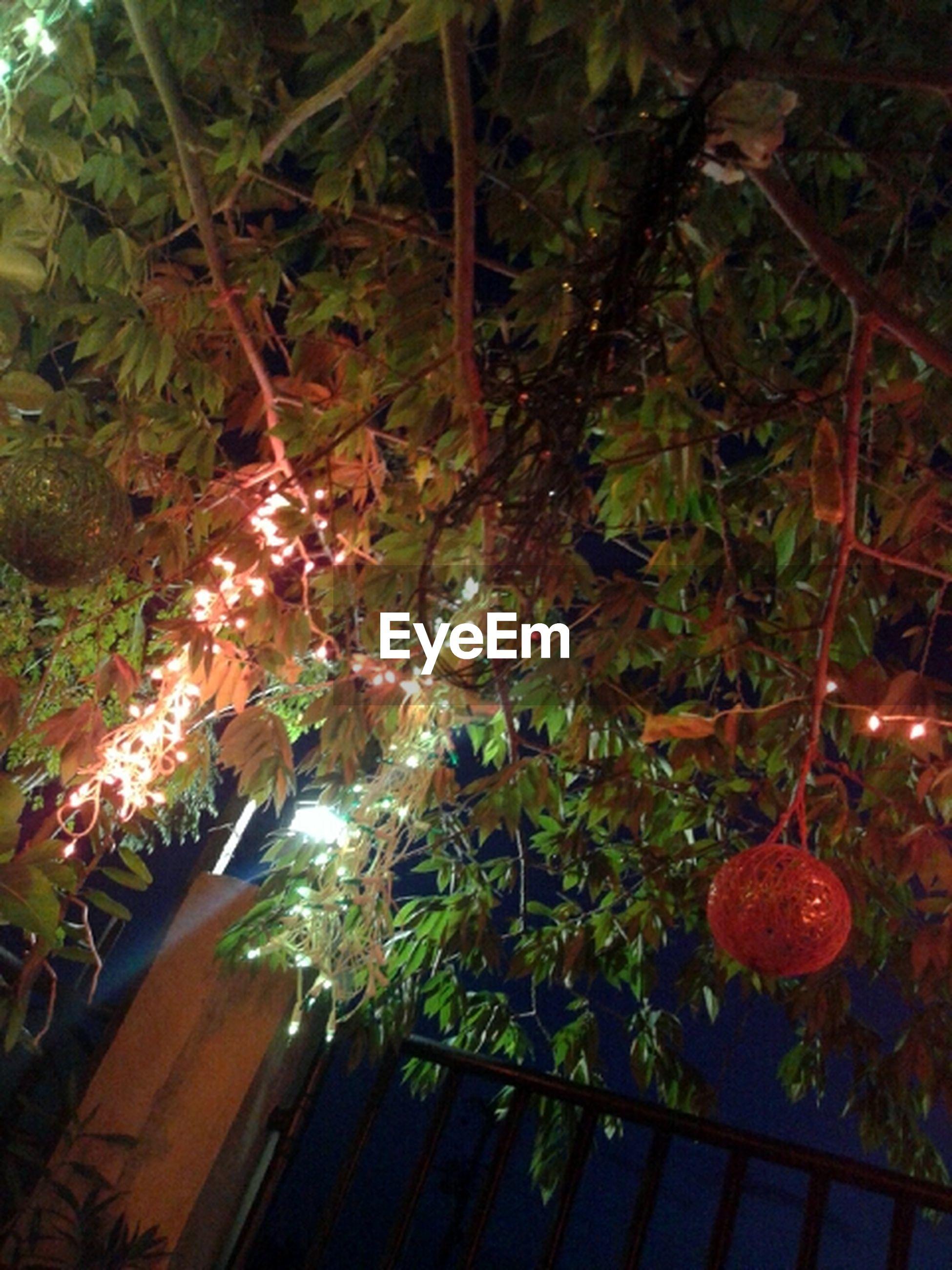 illuminated, decoration, night, tree, christmas, hanging, celebration, growth, lighting equipment, christmas decoration, indoors, low angle view, christmas tree, branch, plant, no people, decor, christmas ornament, tradition, freshness