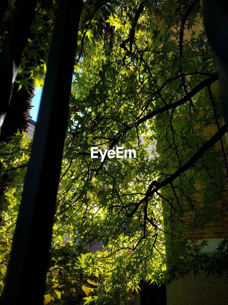 tree, nature, growth, forest, branch, beauty in nature, tree trunk, day, no people, tranquility, low angle view, outdoors, scenics