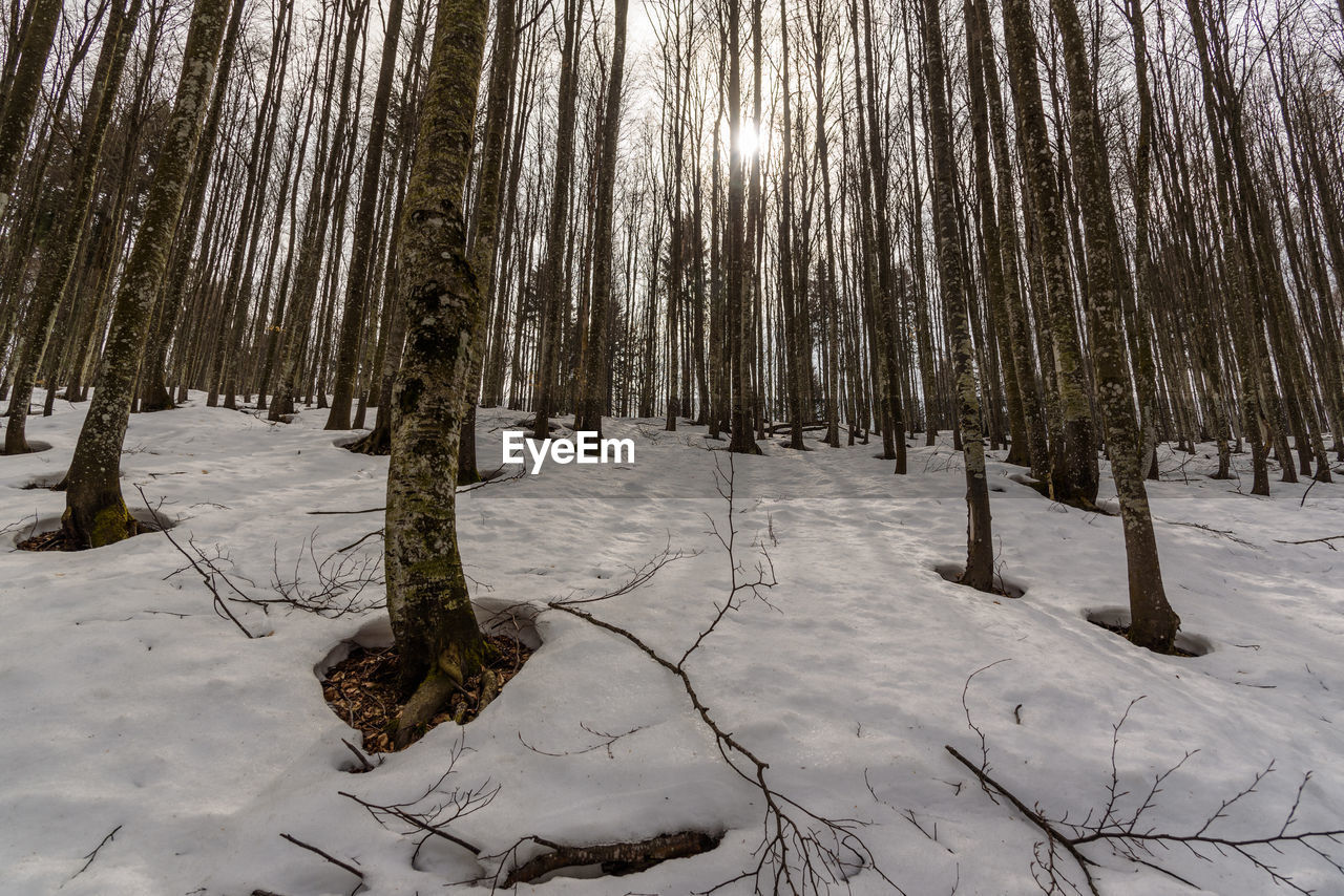 snow, winter, cold temperature, land, tree, plant, forest, tranquility, nature, beauty in nature, trunk, tree trunk, tranquil scene, field, no people, non-urban scene, scenics - nature, covering, woodland, outdoors, coniferous tree