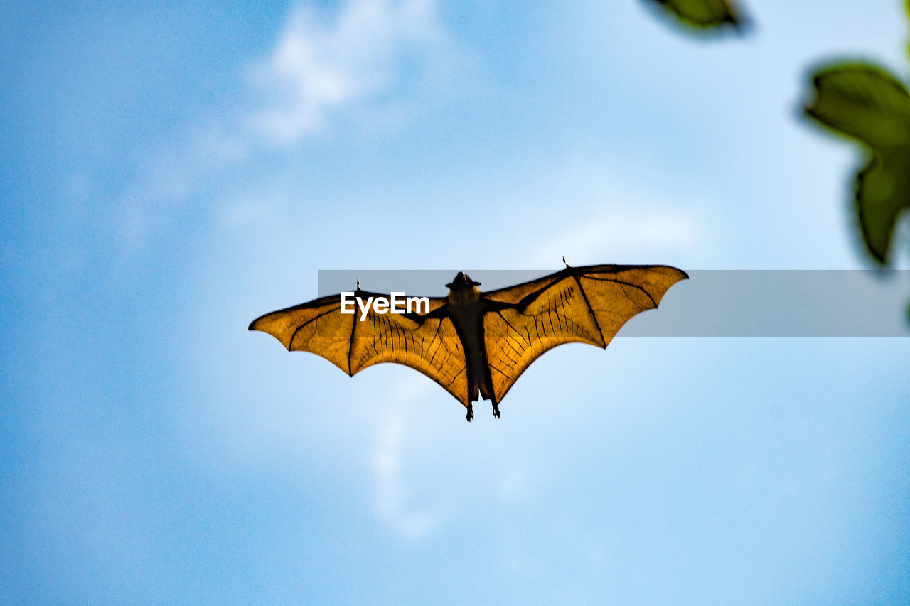 Low angle view of bat flying by tree against sky