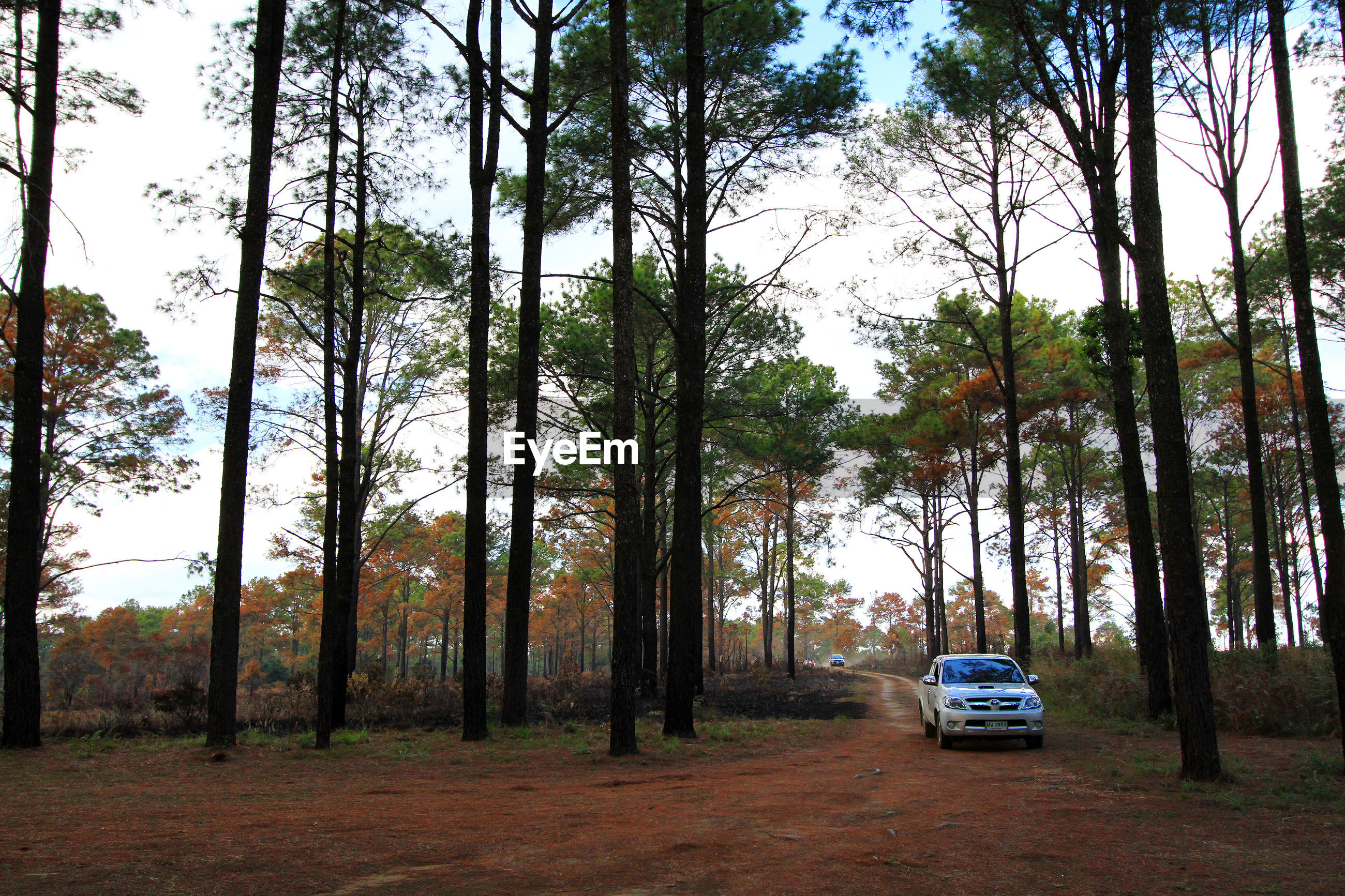 CARS ON LAND IN FOREST