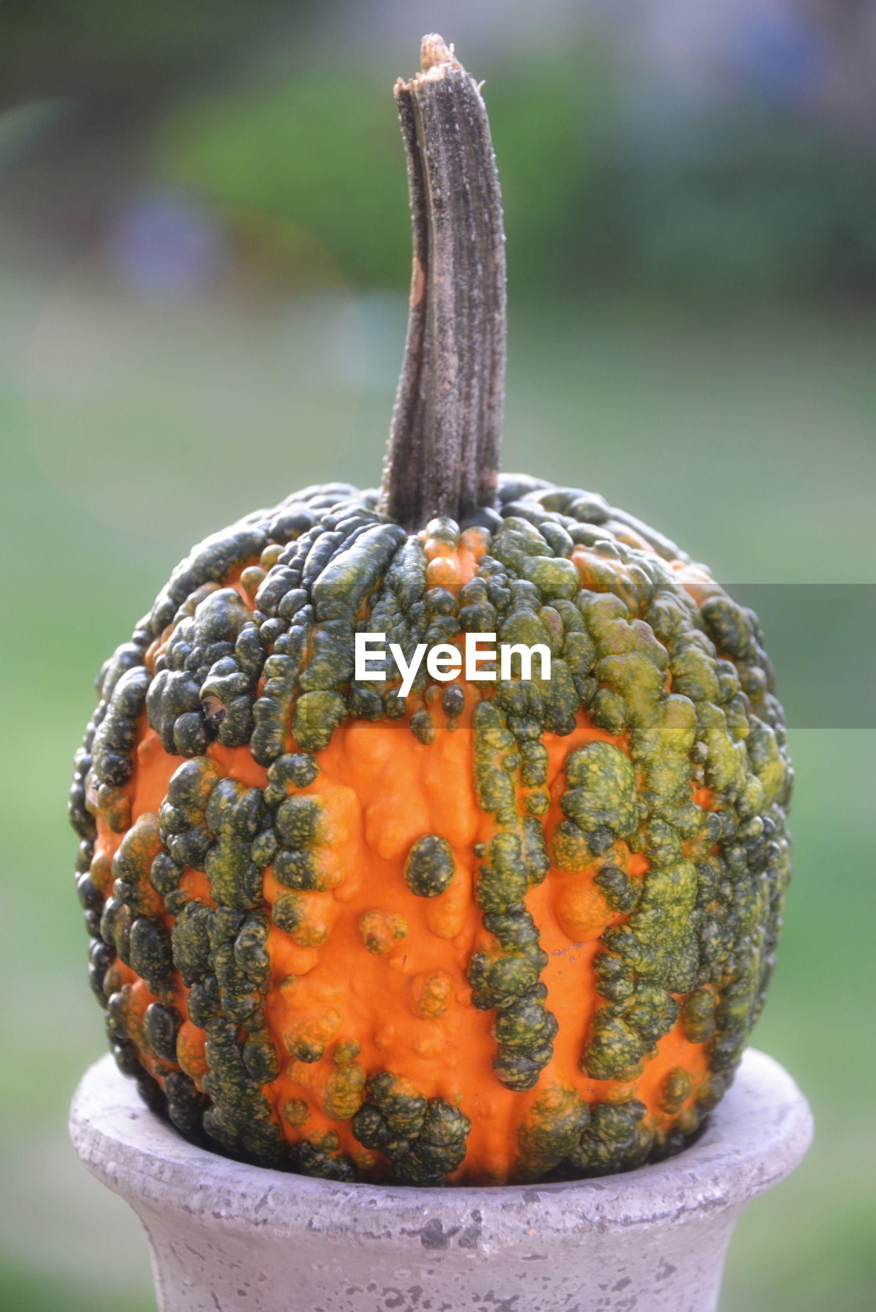 Close-up of  ornamental pumpkin
